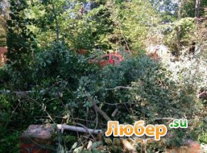 Расчистка участка. Покос травы, бурьяна. Спил дерева.